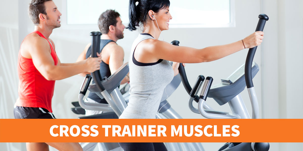 Which muscles does a cross trainer work